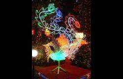 特殊材质灯会:凤(LED)